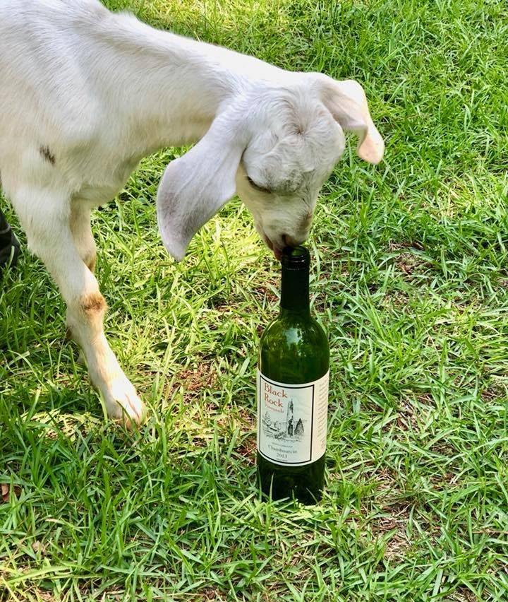 Goat & Wine
